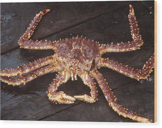 Alaskan King Crab Wood Print by Rondi Church