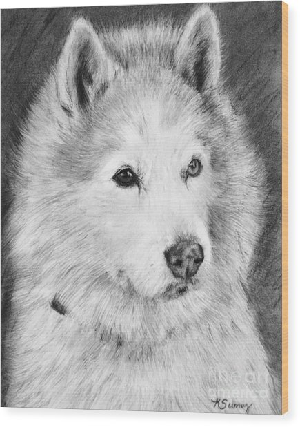 Alaskan Malamute Drawing Mardi Wood Print