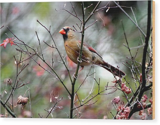 Alert - Northern Cardinal Wood Print