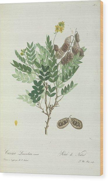 Alexandrian Senna Wood Print