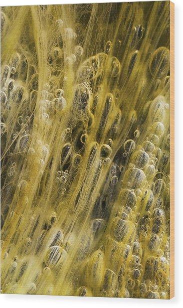 Algae Bubbles In Creek Wood Print