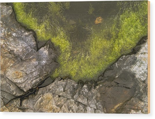 Algae Pool Abstract Photo Wood Print by Peter J Sucy