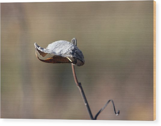 Alien Seed Pod? Wood Print by Kevin Snider