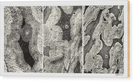 Alien Triptych Landscape Bw Wood Print