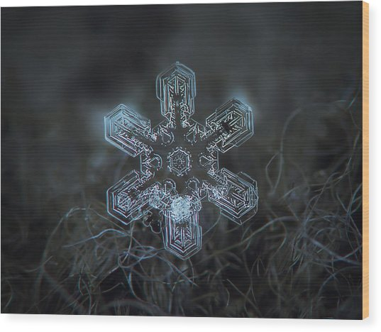 Snowflake Photo - Alioth Wood Print
