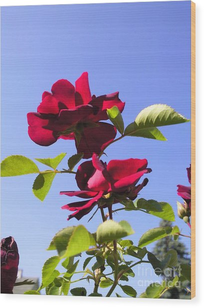 All About Roses And Blue Skies Iv Wood Print by Daniel Henning
