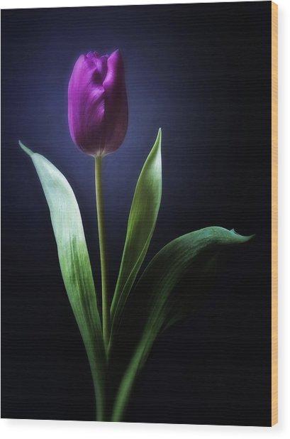 Black And White Purple Tulips Flowers Art Work Photography Wood Print