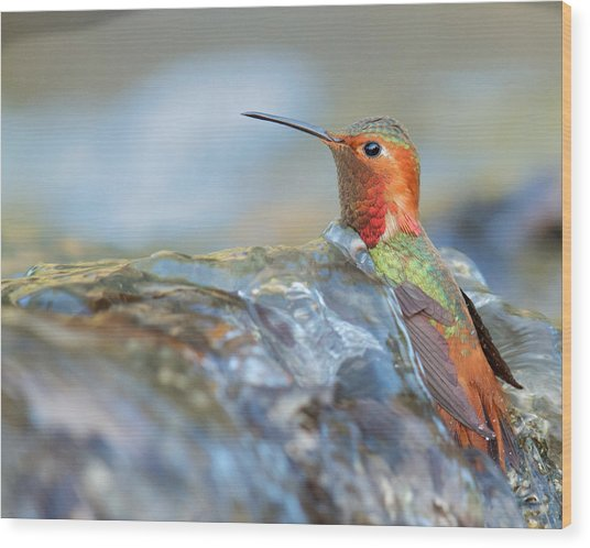 Allen's Hummingbird Taking A Bath On A Waterfall Wood Print