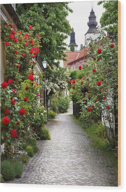Alley Of Roses Wood Print