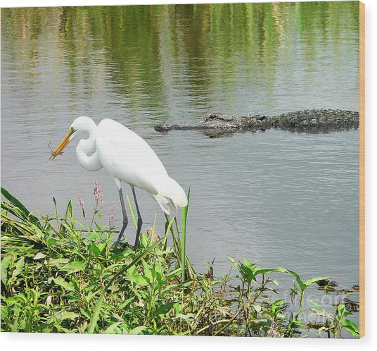 Alligator Egret And Shrimp Wood Print