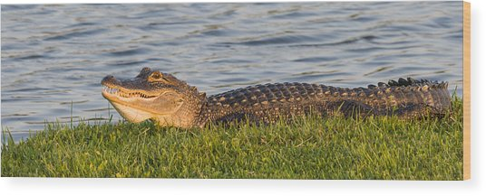 Alligator Smile Wood Print