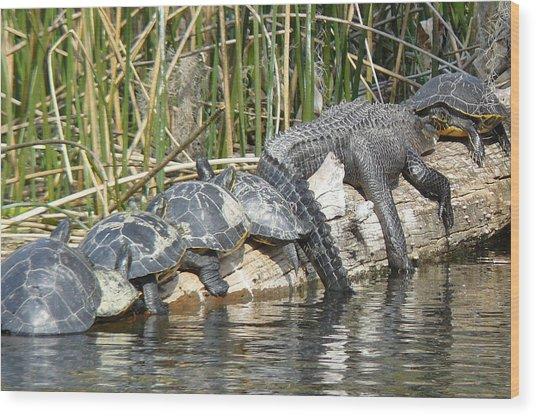 Alligator Turtle Train Wood Print by Krista Keck