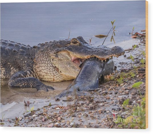 Alligator With A Fish Wood Print