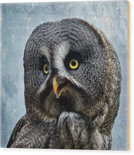 Allocco Della Lapponia - Tawny Owl Of Lapland Wood Print
