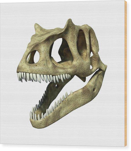 Allosaurus Dinosaur Skull Wood Print by Leonello Calvetti/science Photo Library
