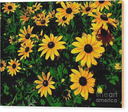 Sunflower Allure Wood Print