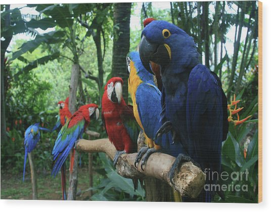 Aloha Kaua Aloha Mai No Aloha Aku Beautiful Macaw Wood Print