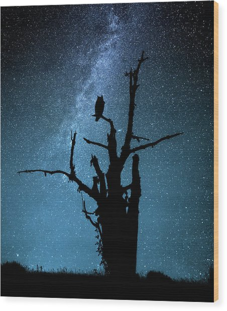 Alone In The Dark Wood Print by Manu Allicot
