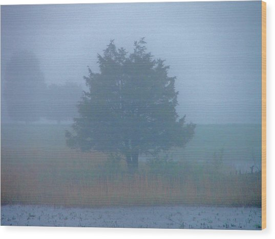Alone In The Fog Wood Print