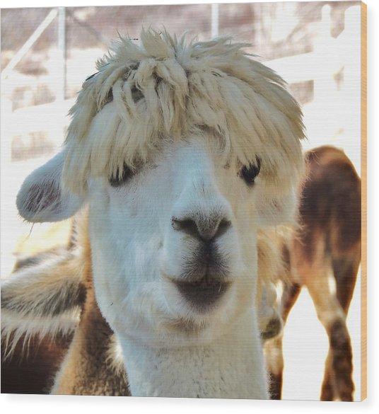 Alpaca Hair Do Wood Print