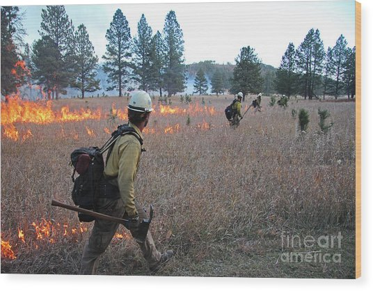Alpine Hotshots Ignite Norbeck Prescribed Fire Wood Print