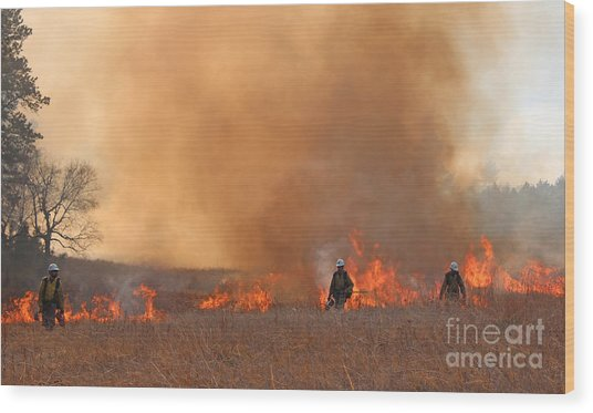 Alpine Hotshots Ignite The Norbeck Prescribed Fire. Wood Print