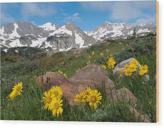 Alpine Sunflower Mountain Landscape Wood Print