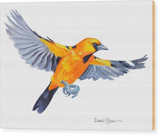 Da200 Altimira Oriole By Daniel Adams  Wood Print