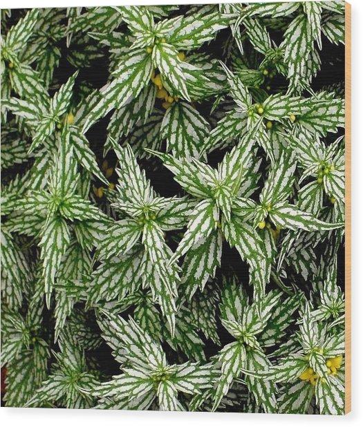 'aluminum Plant Close-up' Wood Print