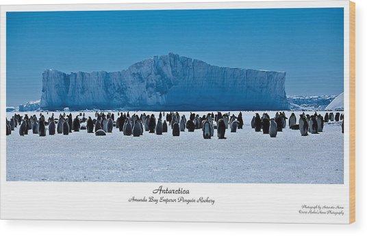 Amanda Bay Rookery Wood Print by David Barringhaus