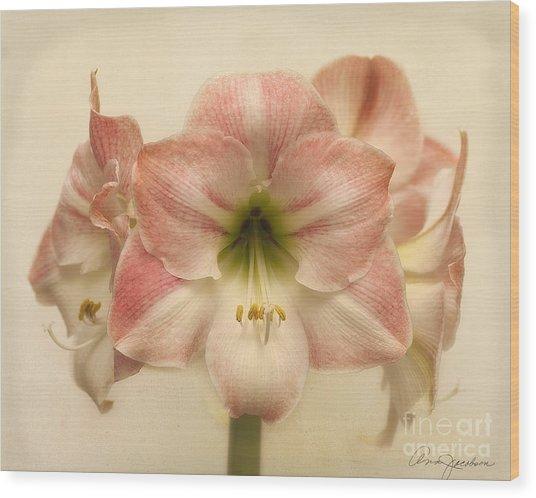 Amaryllis Apple Blossom Wood Print