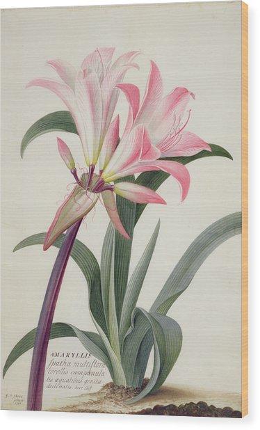 Amaryllis Belladonna, 1761 Wood Print