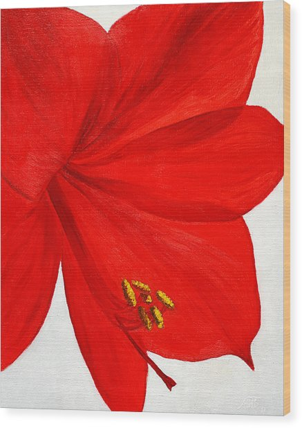 Amaryllis Flower Wood Print