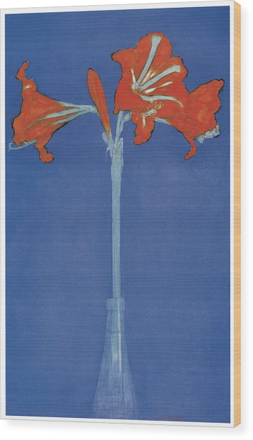Amaryllis In A Flask In Front Of A Blue Background Wood Print