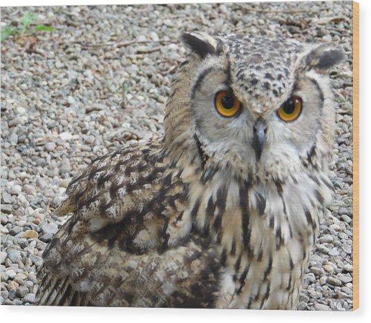 Amber Eyes Owl Wood Print