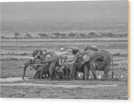 Amboseli Ellies Wood Print