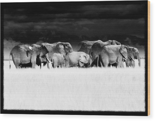 Amboseli Herd With Egret Wood Print