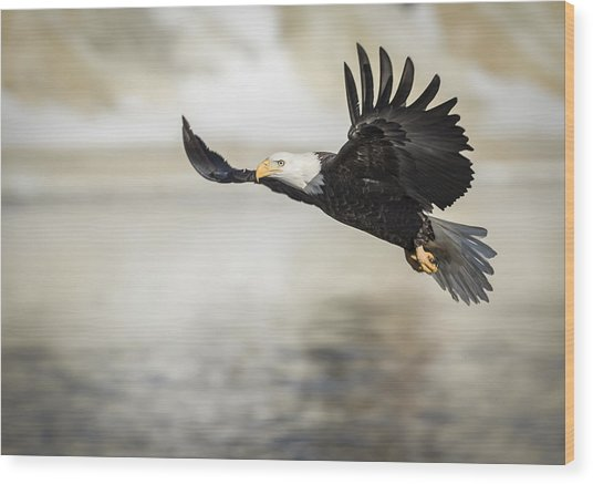 American Bald Eagle 2015-22 Wood Print