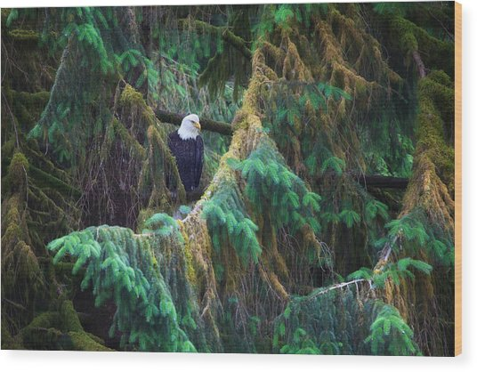 American Bald Eagle In The Pines Wood Print