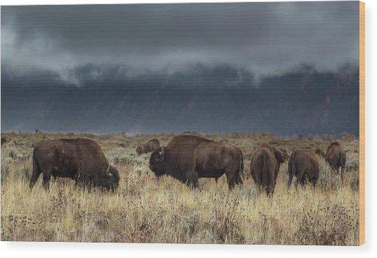 American Bison On The Prairie Wood Print