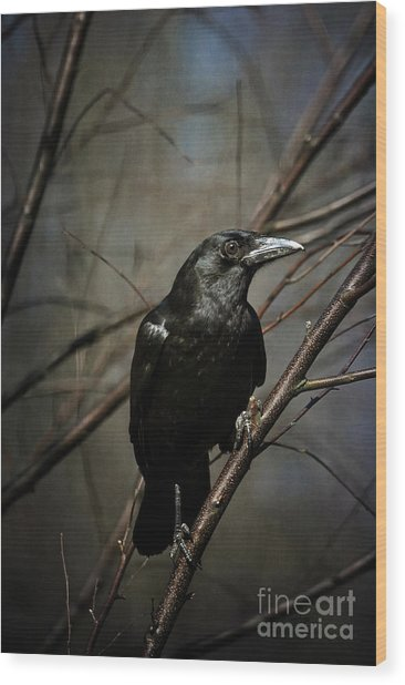 Wood Print featuring the photograph American Crow by Lois Bryan