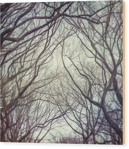 American Elm Trees Of Central Park In New York City In Winter Wood Print by Lisa Russo