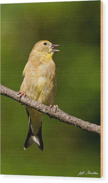 American Goldfinch Singing Wood Print