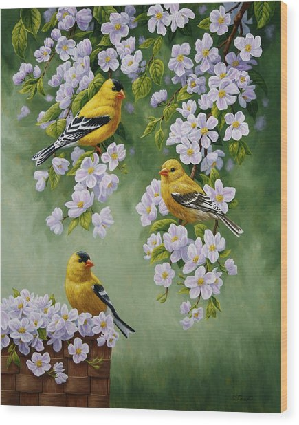 American Goldfinches And Apple Blossoms Wood Print