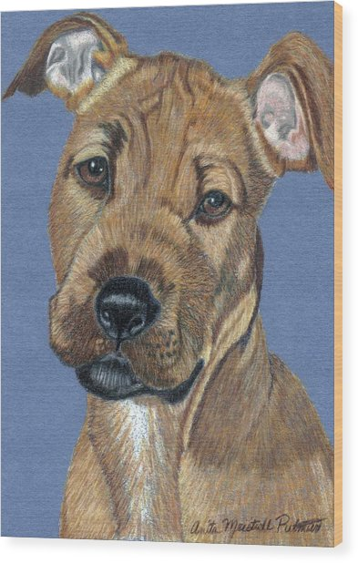 American Pit Bull Terrier Puppy Wood Print by Anita Putman