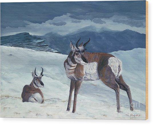 American Pronghorn Wood Print