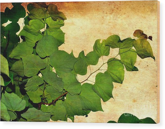American Redbud Wood Print