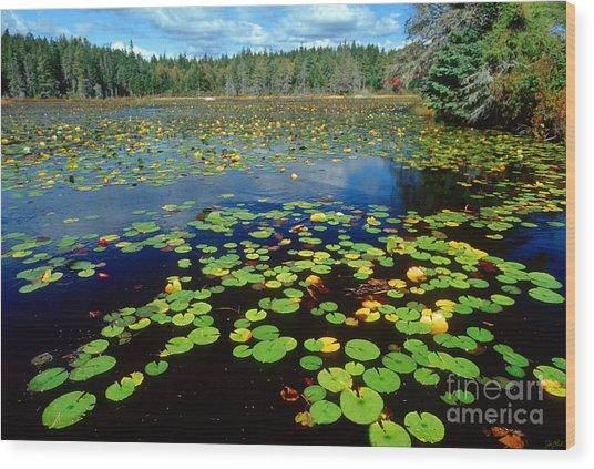 Ames Pond Wood Print by Jim Block