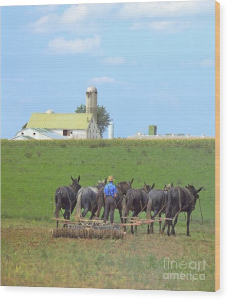Amish Farmer Working The Land Wood Print