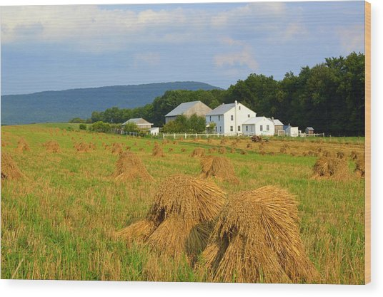 Amish Harvest #1 - Milroy Pa Wood Print
